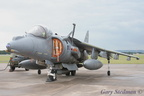 Harrier waiting #1