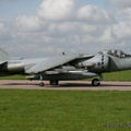 Single colour Harrier