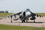 Harrier nose on #2