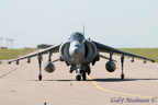 Harrier nose on #1