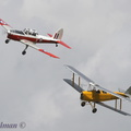 Tiger Moth and Chipmunk duo